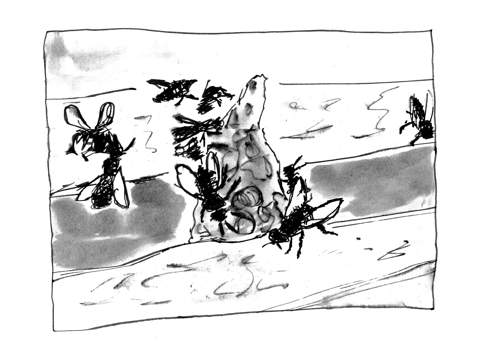 Tintezeichnung von Fliegen die ein Stück Irgendwas zwischen zwei Holzlatten begklettern.