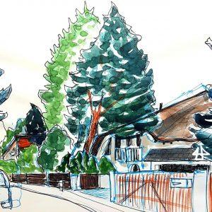 Aquarellierte Finelinerzeichnung: Einfamilienhaus mit flachem geschwungenem Dach und davor zwei große Tannen.