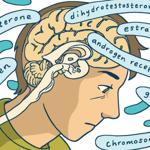 Excerpt from the Comic: The head of the main characters with a cross section of the brain, around it words for hormones.